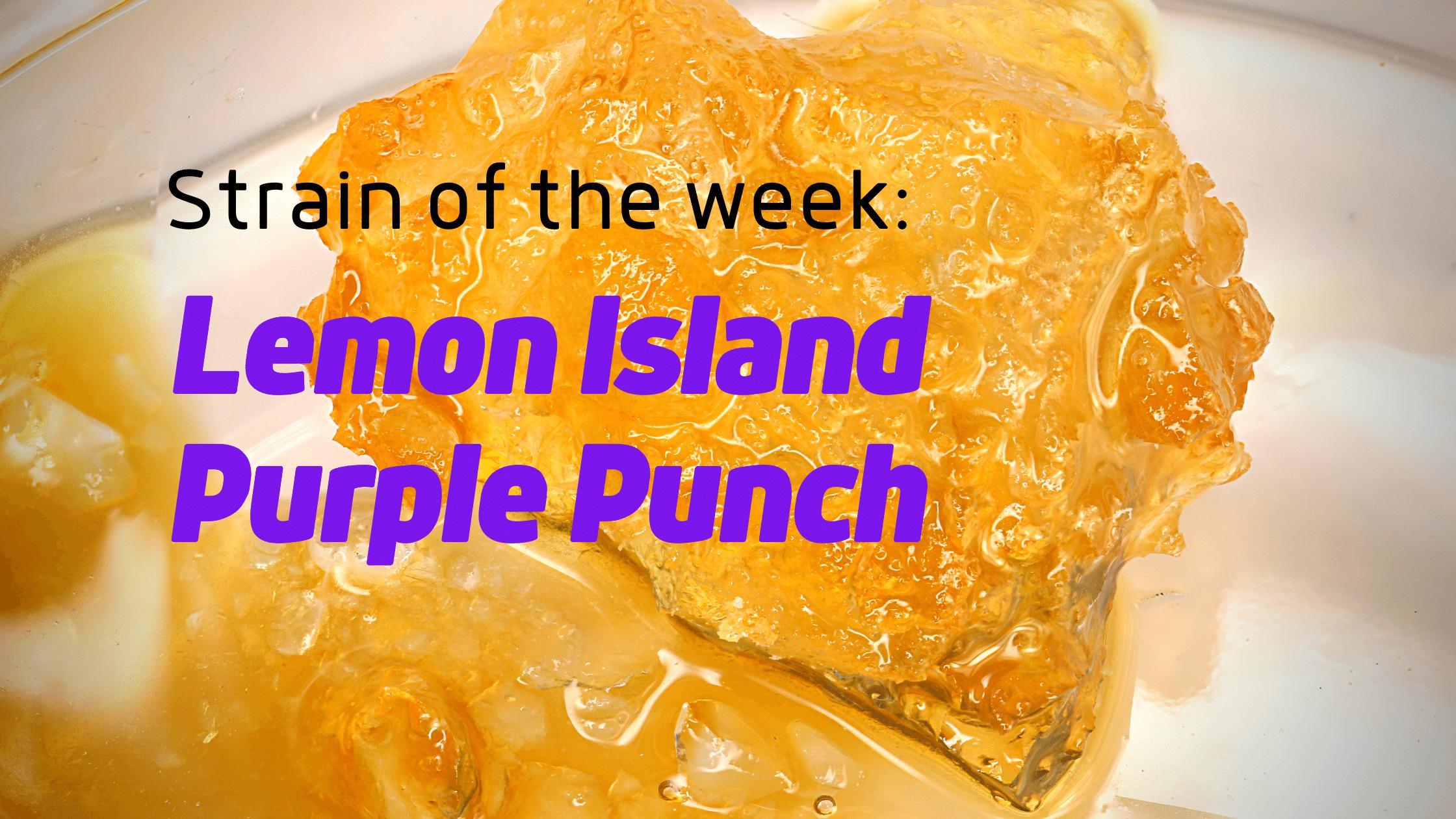 Lemon Island Purple Punch Sugar Wax Cannabis